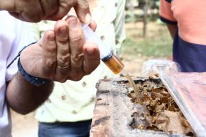 Criação de abelhas sem ferrão