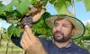 Uva plantação na agrotins -AG-04-06-19 (61)_100.jpg