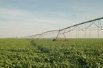 A área plantada de soja  de sequeiro aparece em primeiro lugar no levantamento da Conab