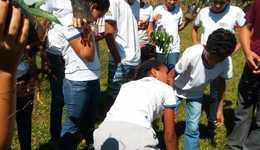 Plantio de mudas em Babaçulândia