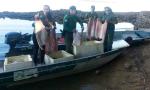 Naturatins apreende 250 kg de peixe em operação no Cantão