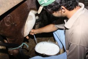 O projeto Balde Cheio é de fundamental importância para a consolidação da cadeia produtiva do leite no Tocantins.