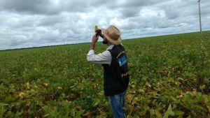 Adapec intensifica o monitoramento da ferrugem asiática da soja nas regiões das Planícies Tropicais (Várzea) no Tocantins