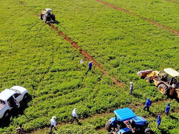 Projeto Campo Sustentável: Linhas abertas para plantio de 3 mil mudas nativas em janeiro de 2019