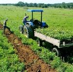 Mudas são plantadas para integração lavoura-pecuária-floresta (ILPF) do Projeto Campo Sustentável
