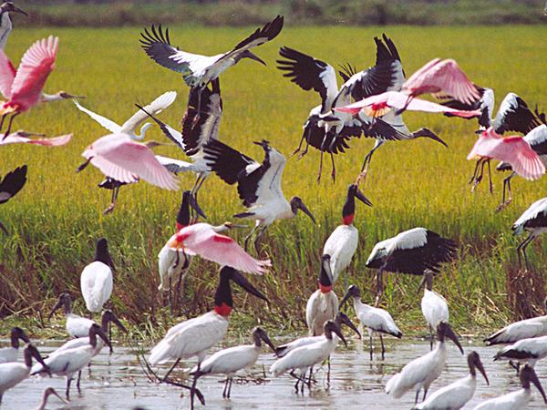 Região do Cantão possui cerca de 500 espécies de aves