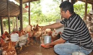 Agosto Verde terá atividade voltada a avicultura