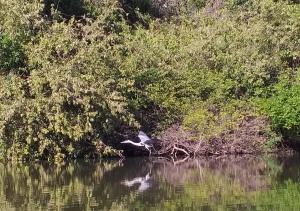 Foto 04 Margem do Rio Caiapó_Crédito Divulgação-Naturtins_300.jpg