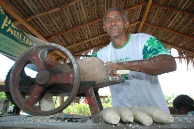 A mandioca é um dos principais produtos cultivados por agricultores familiares no Tocantins