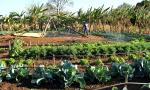 Produção de hortaliças é uma das atividades das mulheres rurais