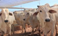 Fator que influenciou positivamente na composição do valor adicionado do IPM definitivo foi crescimento pecuária com 18,37% e da agricultura com 14,90%