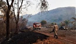 Árvore cai na rodovia e precisa ser cortada por um bombeiro militar