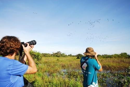 O Tocantins possui grande potencial para o turismo de observação de aves