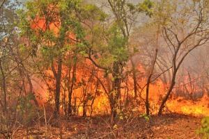 Chamas chegaram a 10 metros de altura com fortes ventos e mato seco em Taquaruçu Grande