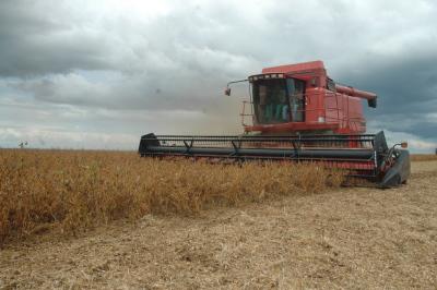 A colheita faz parte de uma das etapas agroclimatológicas