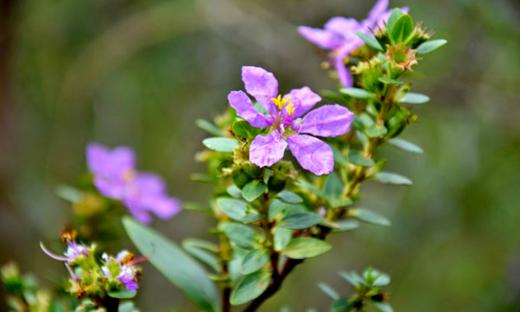 Período de flora no bioma Cerrado