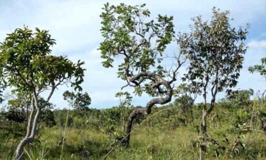 No Brasil, 11 de setembro é o Dia Nacional do Cerrado, reservado para lembrar a importância do segundo maior bioma da América do Sul