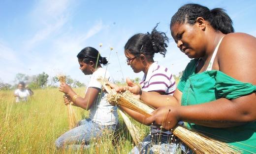 O capim dourado que é colhido nas veredas do Jalapão é a principal fonte de renda das comunidades locais