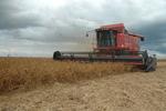 Do plantio à colheita o produtor precisa saber do clima