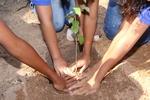 Estudantes da Escola Estadual Maria dos Reis plantam mudas em ação do Dia da Árvore