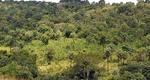 Municípios terão mais autonomia para conceder licenças ambientais de baixo impacto ambiental de âmbito local