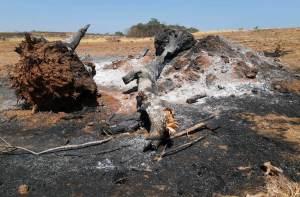 Material Lenhoso queimado
