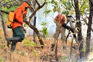 Bombeiros militares e brigadistas atuam em combate a incêndio florestal
