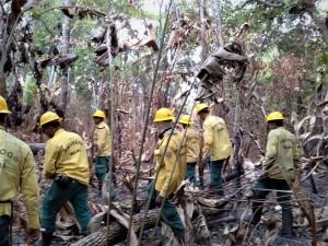 Brigadistas do Ibama em combate a incêndios florestais no Tocantins