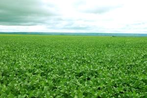 Adapec colabora com ritmo de crescimento nos 31 anos do Tocantins