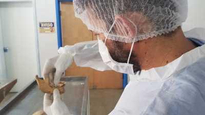 Peritos do IML identificaram duas vítimas por arcada dentária (2).jpeg