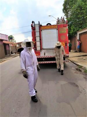 Bombeiros militares precisaram de roupas de apicultor para as buscas aos insetos