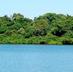 O Tocantins é composto pelo bioma Cerrado, Amazônico e possui a zona de transição entre os dois biomas
