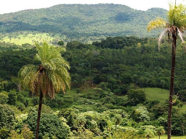 13% do bioma do Tocantins é Amazônia