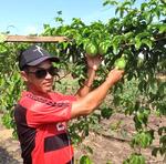 O agricultor Vicente Rivaldo Borges da Silva, de Araguatins, melhorou a produtividade no cultivo de melancia e maracujá em sua propriedade