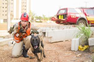 Sargento Mollo dá comando para cadela Sky em treinamento em área colapsada