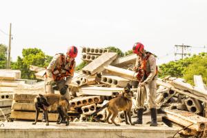 Equipe do CBM com Sky e Nanf em treinamento de busca em área com escombros