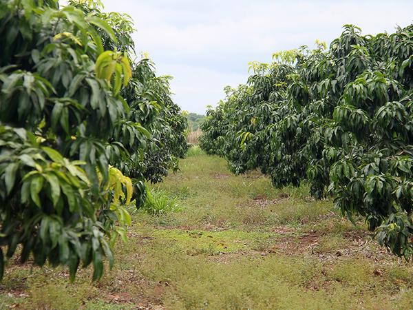 Pesquisas fazem parte do estudo piloto para avaliação de risco de contaminação no Perímetro de Irrigação São João, por meio de ensaios ecotoxicológicos, que estão sendo executados pela Fundação de Apoio Científico e Tecnológico do Tocantins
