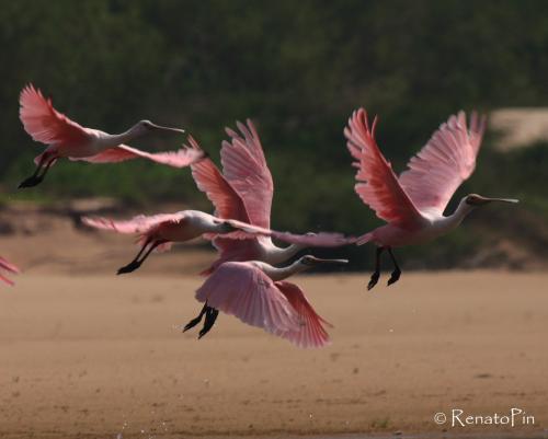 Turismo de observação de aves no Cantão