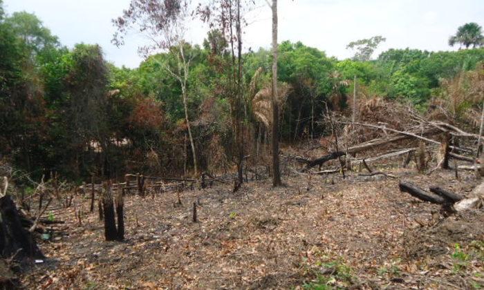 A redução do desmatamento também foi constatada por meio de dados do Sistema Integrado de Gestão Ambiental (SIGA)