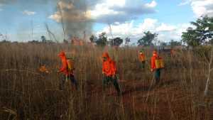 No Tocantins os brigadistas combateram todos os focos de incêndio
