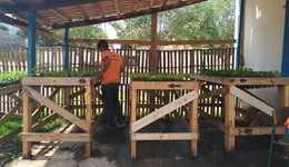 As mudas serão utilizadas para reflorestar áreas degradadas
