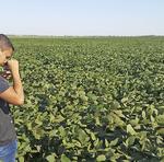 Monitoramento da lavoura de soja para prevenção da ferrugem asiática, praga que acomete a cultura