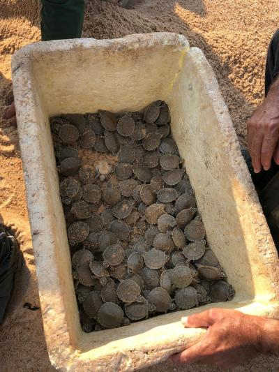 Quelônios capturados e soltos no rio Araguaia