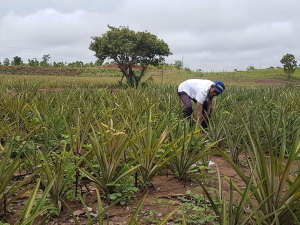 Agricultor aumentou produtividade com assistência técnica do Ruraltins
