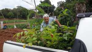 Ao todo serão 4.000 m² de plantio de cerca de 350 mudas nativas e frutíferas