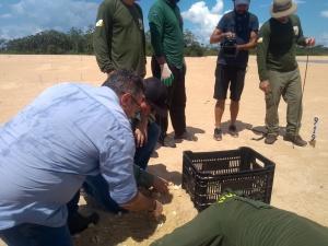Abertura dos tabuleiros de ninhos do Projeto Quelônios da Amazônia no Tocantins