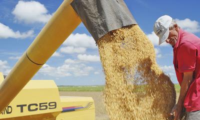 A soja é a principal fonte da economia no agronegócio tocantinense