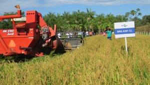 Unidade Demonstrativa de cultivo de arroz consorciado ao capim instalada no Centro Agrotecnológico de Palmas (Agrotins)