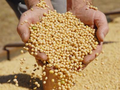 A soja é o principal grão produzido no Tocantins