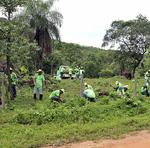 Governo do Tocantins e ONG 8 Billion Trees recuperam área degradada com o plantio de 10 mil mudas